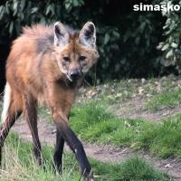 Brasil Sukses Bikin Kloning 8 Binatang Langka, Indonesia Kapan?